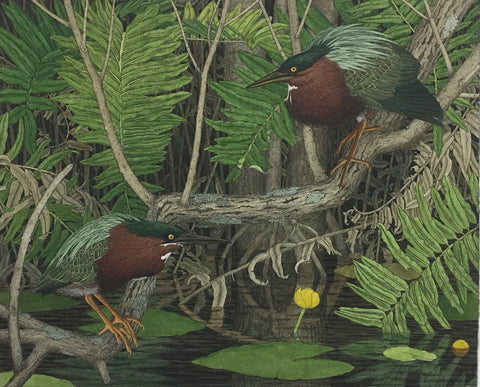 Green Herons And Ferns