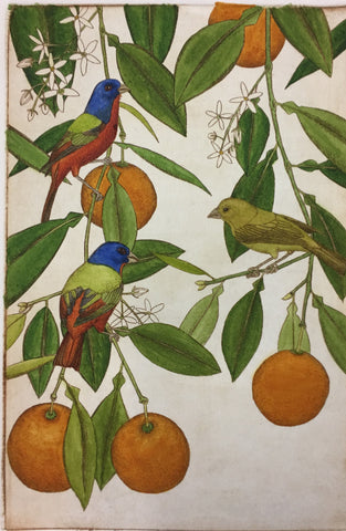 Painted Buntings