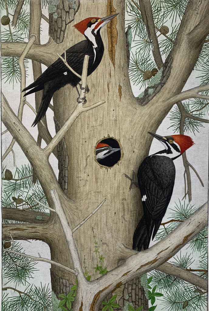 Pileated Woodpeckers and Nest