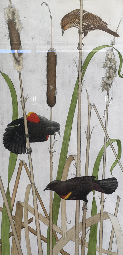 Red Winged Blackbirds and Cattails