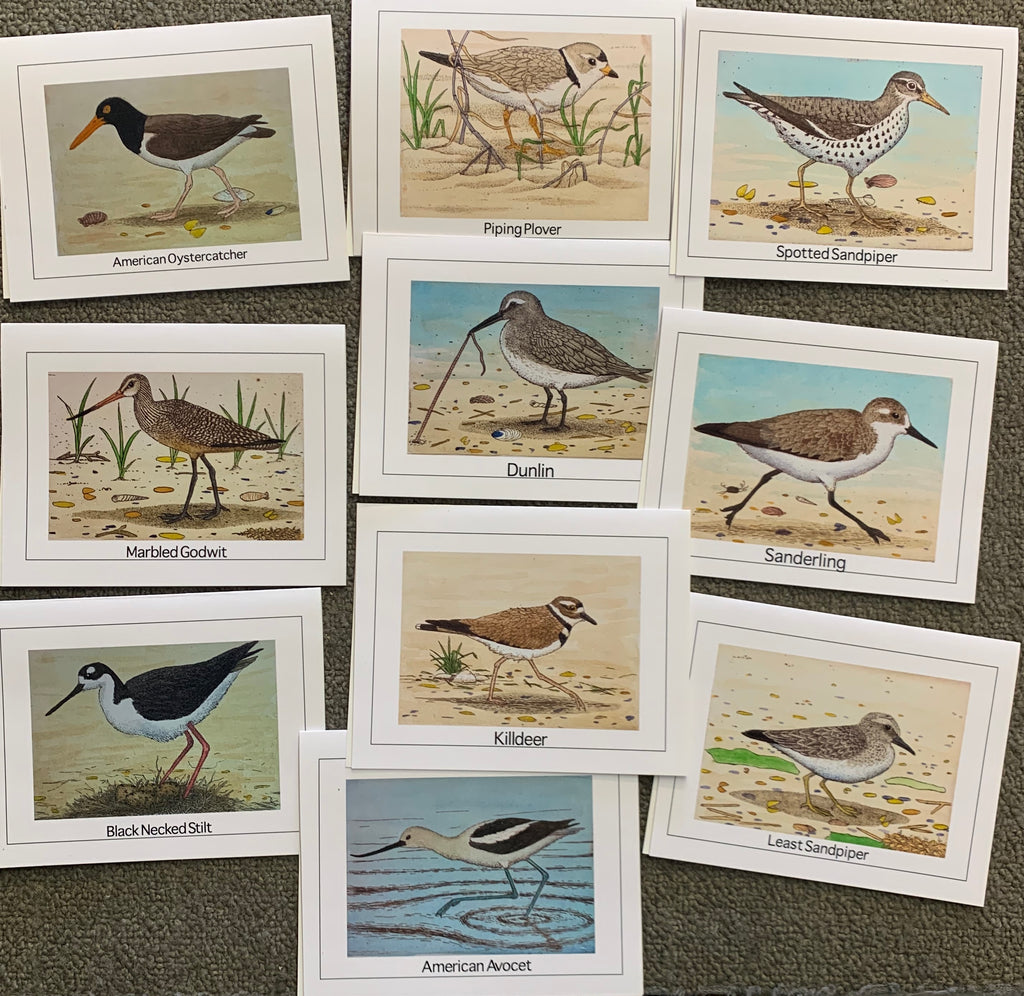 Shorebird Cards