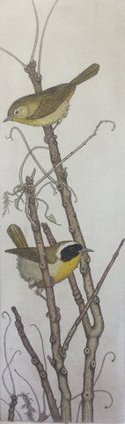 Common Yellowthroats