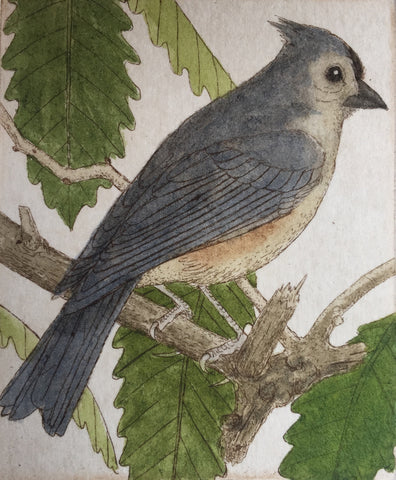 Tufted Titmouse II