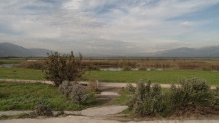 LN_096 Israel Nature and Landscape footage: Pan right - northern Israel near Rosh Pina in summer