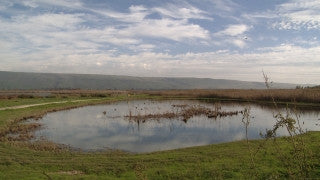 LN_087 Israel Nature and Landscape footage: Jordan Valley - tilt up from fields to palm trees to mountains