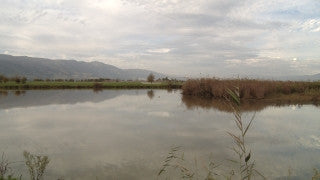 LN_033 Israel Nature and Landscape footage: Jordan River in winter, strong water stream