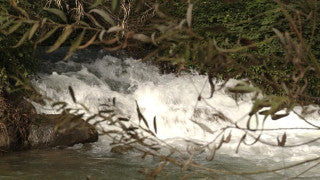 LN_020 Israel Nature and Landscape footage: Jordan River with a strong winter stream