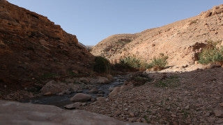 LN_026 Israel Nature and Landscape footage: winter spring in the Negev Desert