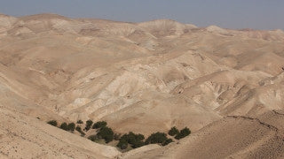 LN_027 Israel Nature and Landscape footage: a small oasis in the Negev Desert