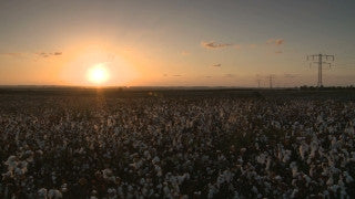 TI_003 Time Lapse Israel: Landscape and Nature - sunset in a cotton field