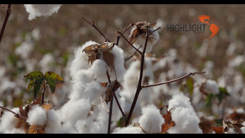 AGR_012 Stock footage of Agriculture In Israel - Cotton harvest 4K