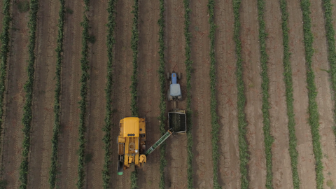AGR_017b Stock footage of Agriculture In Israel - cotton picking with combine crossing frame.