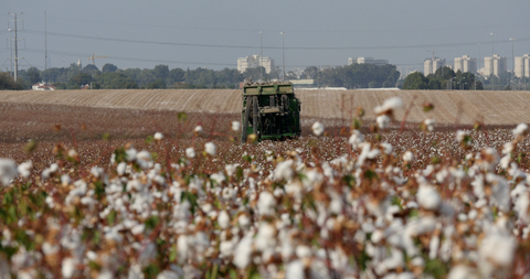 AGR_016 Stock footage of agriculture in Israel : Cotton picking