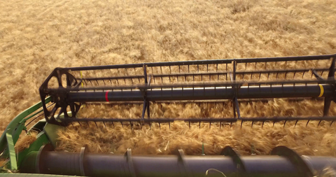 AGR_022 Agriculture In Israel: 4K video clip of hay harvest by a combine.