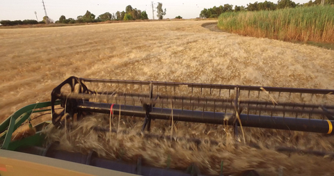 AGR_027 Stock footage of Agriculture in Israel: 4K video clip of hay fields during harvest