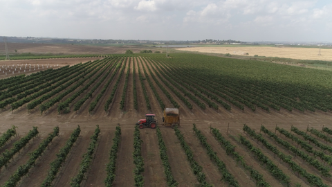 AGR_035 Stock footage of agriculture in Israel: drone aerial clip of fields - vines