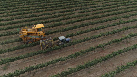 AGR_041 Agriculture In Israel: grapes harvest 4K drone aerial video