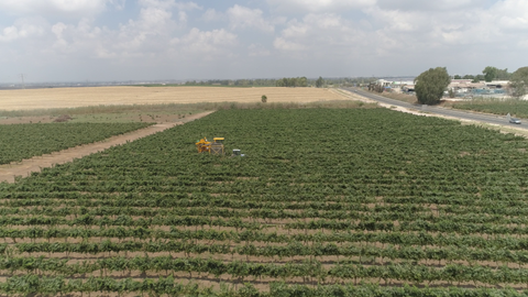 AGR_042 Agriculture In Israel: aerial video of Harvesting grapes in the vineyard