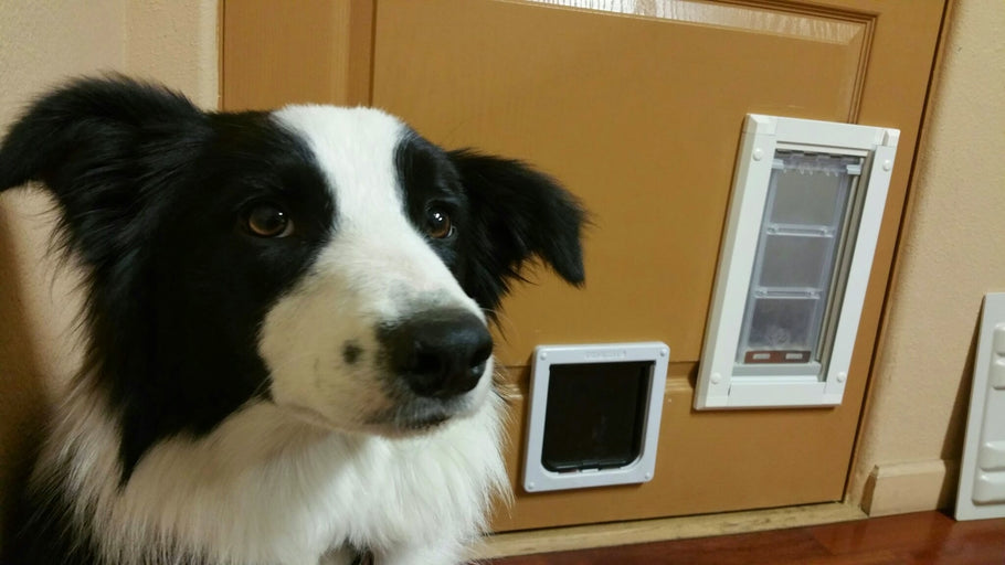 What's the Secret to a Great Pet Door?