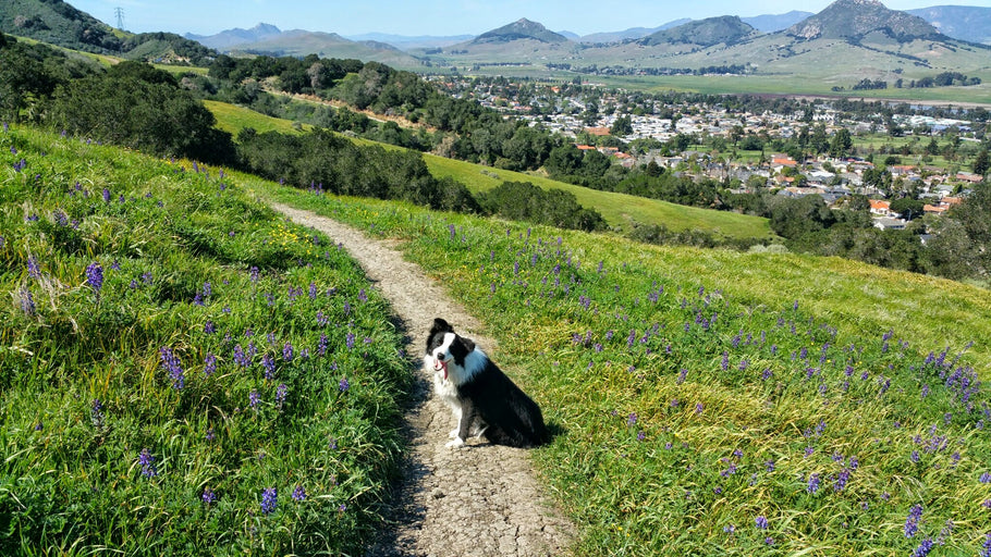 Central Coast Places to Visit with your Dog this Weekend