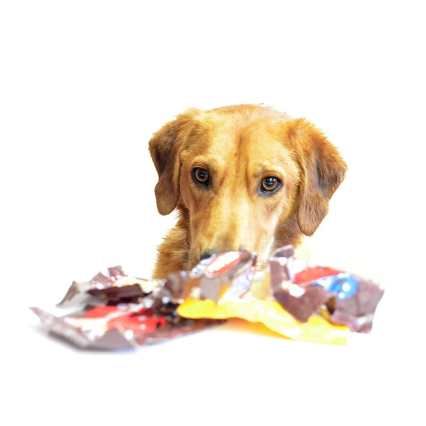 The Truth about Dogs and Chocolate