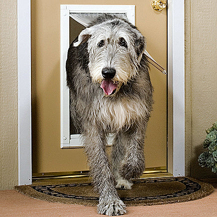 The perfect big dog door for your large breed doggie