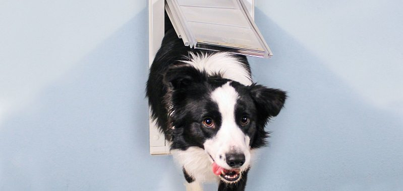 Choosing a Pet Door: Common Concerns & Solutions