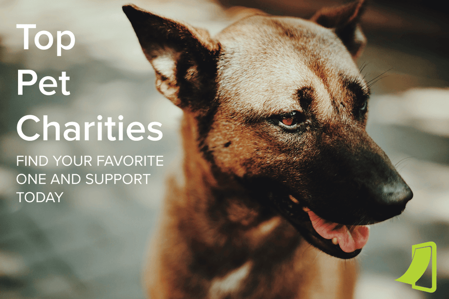 These are the Best Pet Charities in the Country