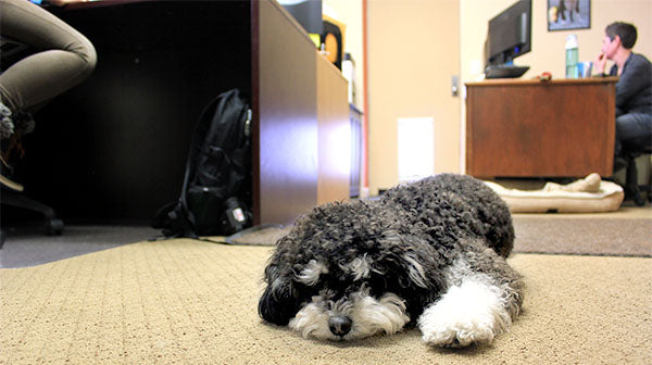 Dogs in the Workplace: Our Pet Pawlicy