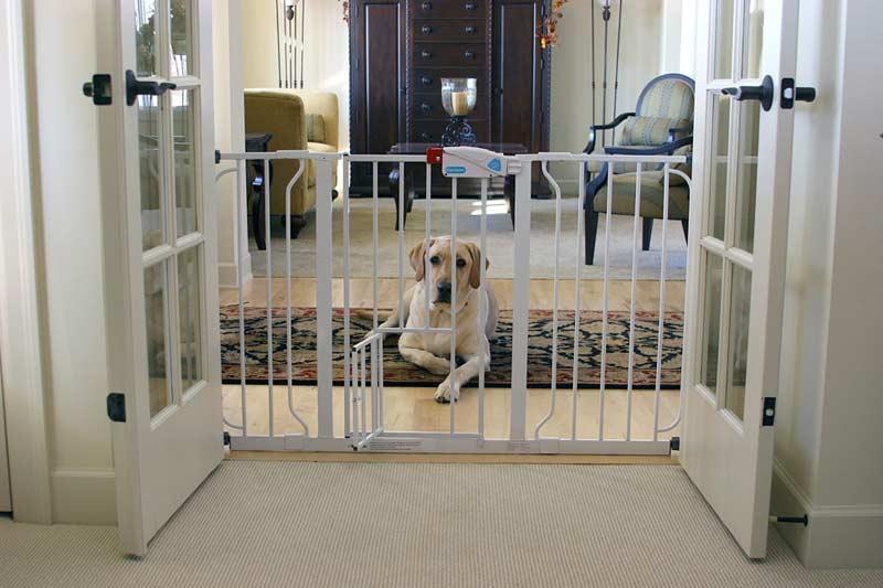 Keeping the Peace: Separating Cats and Dogs at Home with a Baby Gate