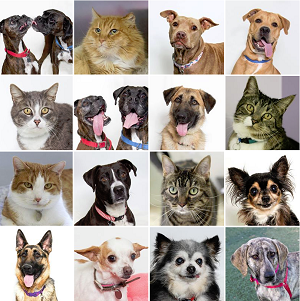 Adoptable dogs and Cats at Woods Humane Society