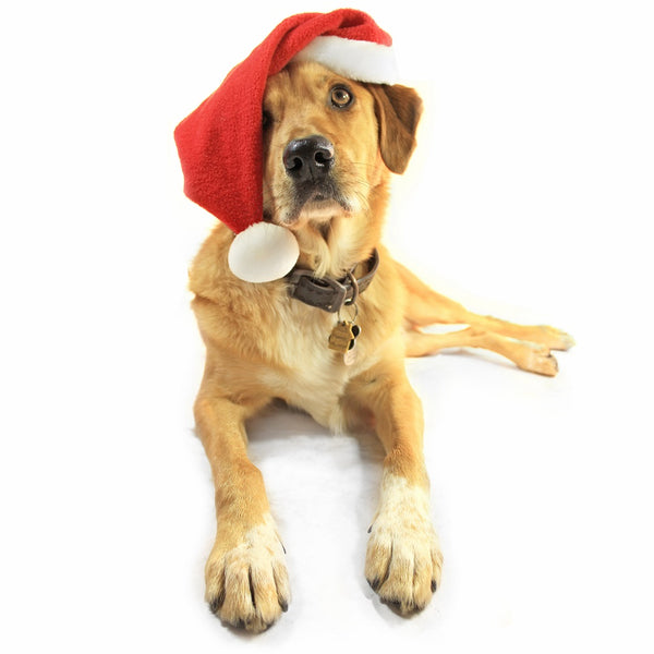 Tips for Pet-Friendly Holiday Decorations
