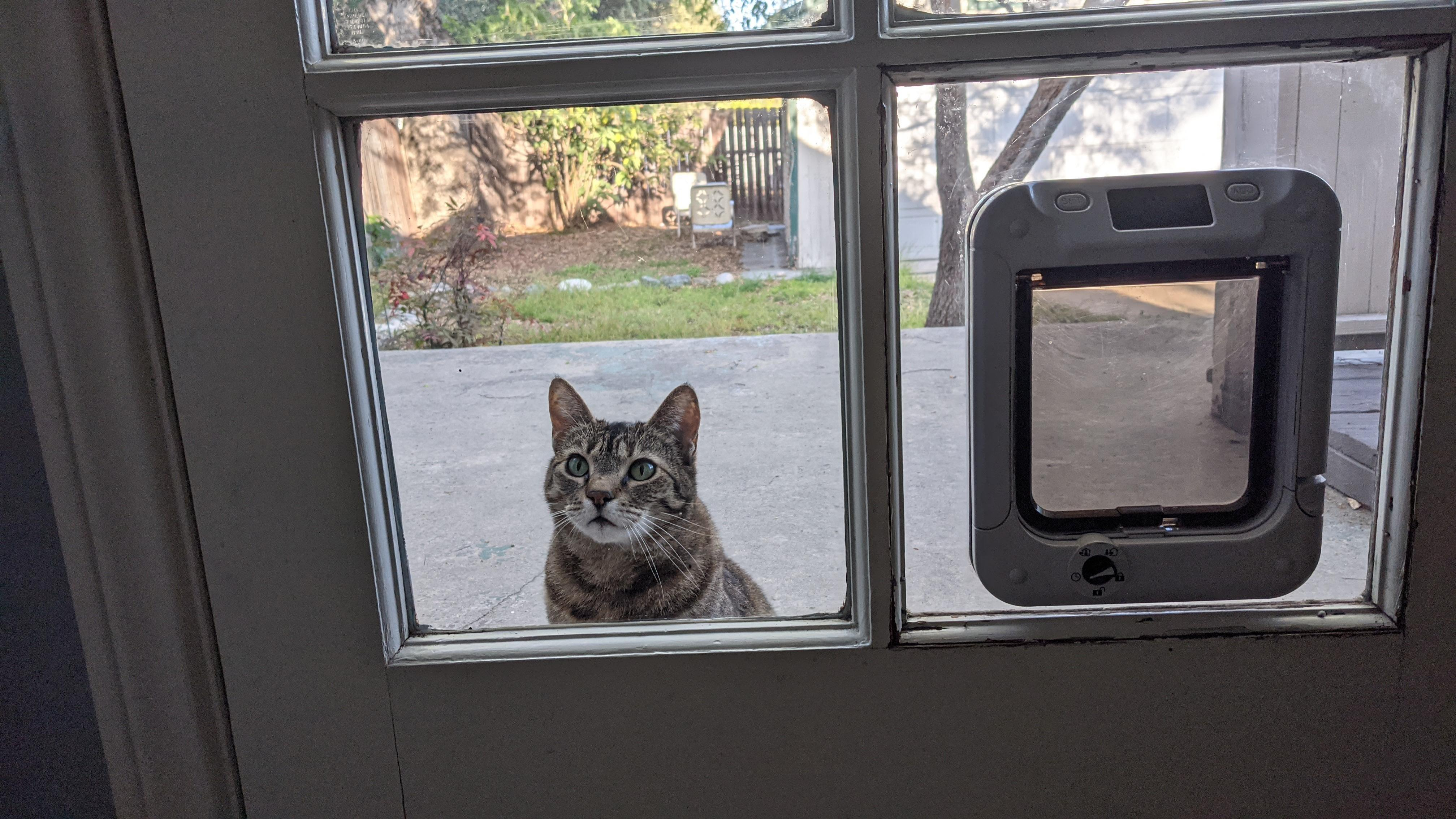 cat with cat mate in glass electronic pet door