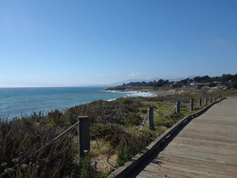 Take your dog to Fiscalini Ranch Preserve boardwalk and trail in Cambria, California
