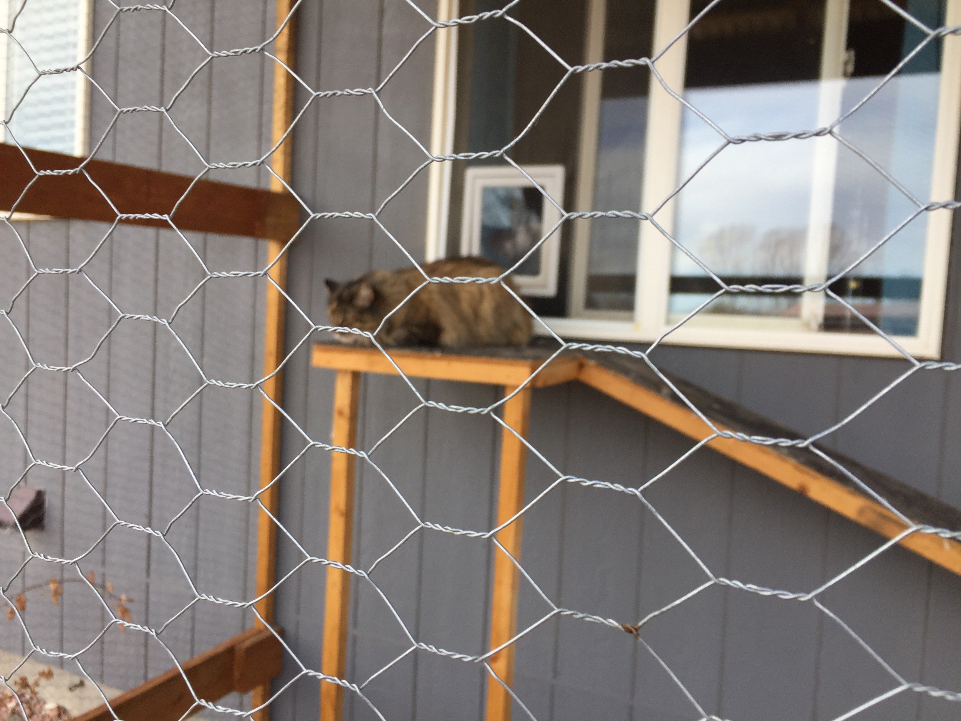 cat lounging on catio