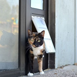 multi-colored cat coming out of endura thermo sash cat flap