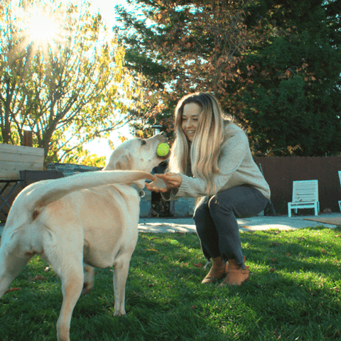 woman playing with yellow lab