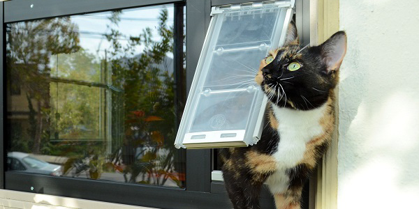 Cat using an Endura Flap Thermo Panel for sash windows