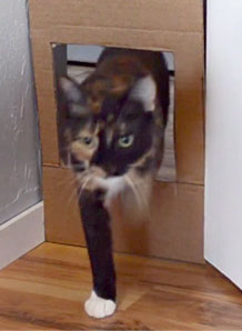 How to measure cats for cat doors starts with a mock cutout