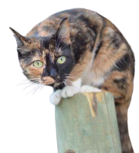 A calico cat perched on a wood column.