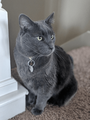cat wondering that separation anxiety in puppies isn't limited to dogs