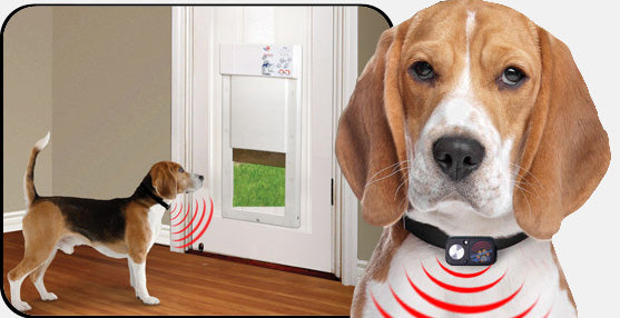 A collar key sends out a signal to electronic doors to open for your own pet