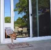 Dogs love using their dog doors for sliders