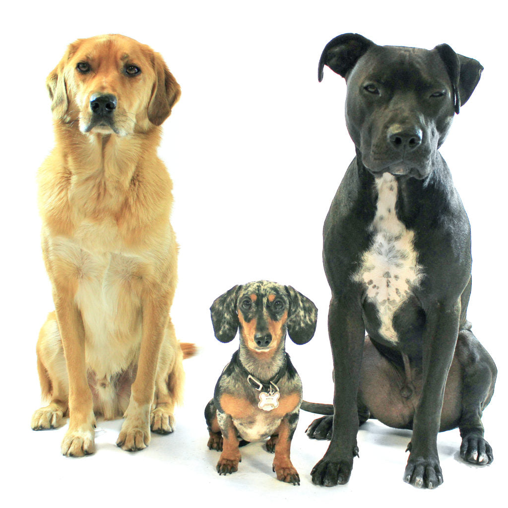 Three dogs who have Q&As about electronic pet doors
