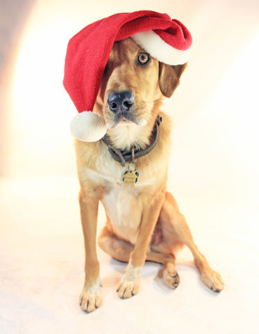 Dog in santa hat - pet Christmas gifts