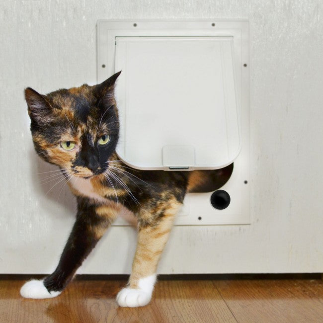 cat using the magnador cat door for walls