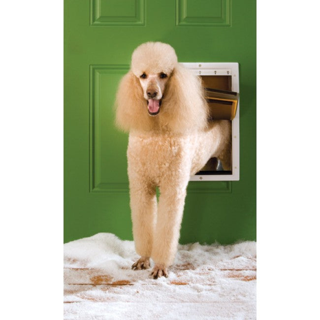 A poodle using an in-wall pet door