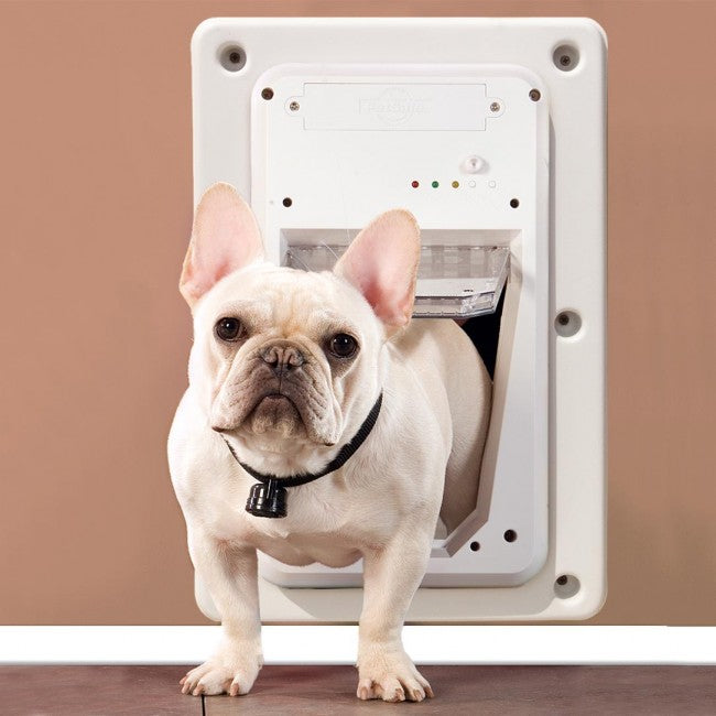 french bulldog using petsafe electronic smart door