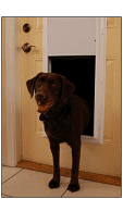 plexidor electronic dog doors for walls, sureflap wall installation kit for dual scan cat flap, in wall doggie doors for walls, petsafe smart door and wall framing kit. walk through screen door