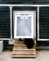 even puppies can use this heavy duty doggy door with ramp